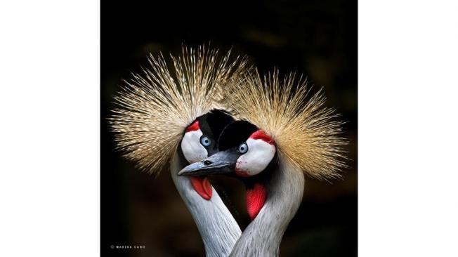 Breathtaking Portraits of Animals by Wildlife Photographer Marina Cano - weather.com